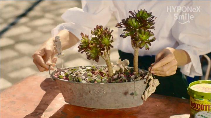 多肉植物立体的寄せ植え